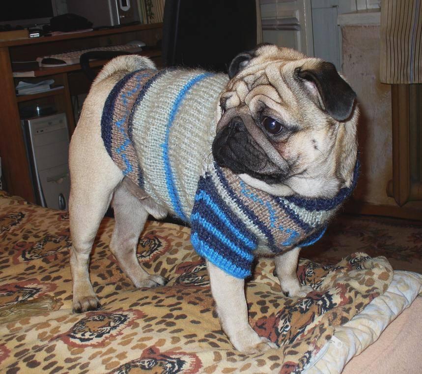 Как связать свитер для собаки своими руками, схемы и выкройки